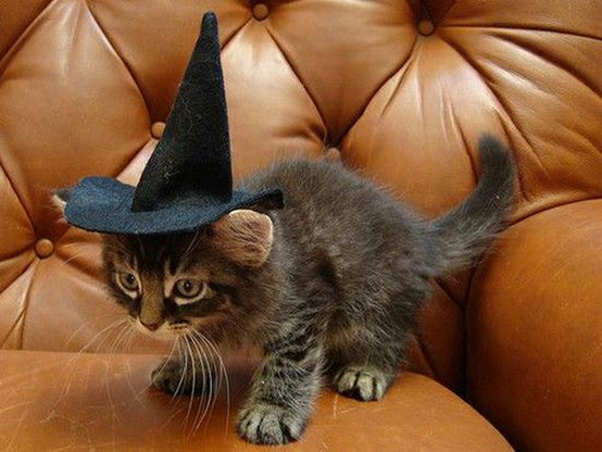 cat-wizard-hat01.jpg