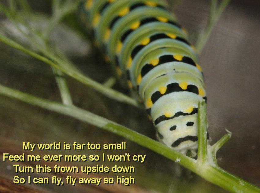 cpillar-24-frown.jpg