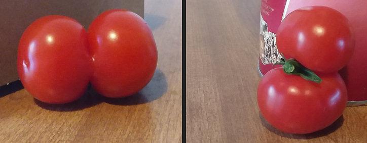 tomatoes02.jpg