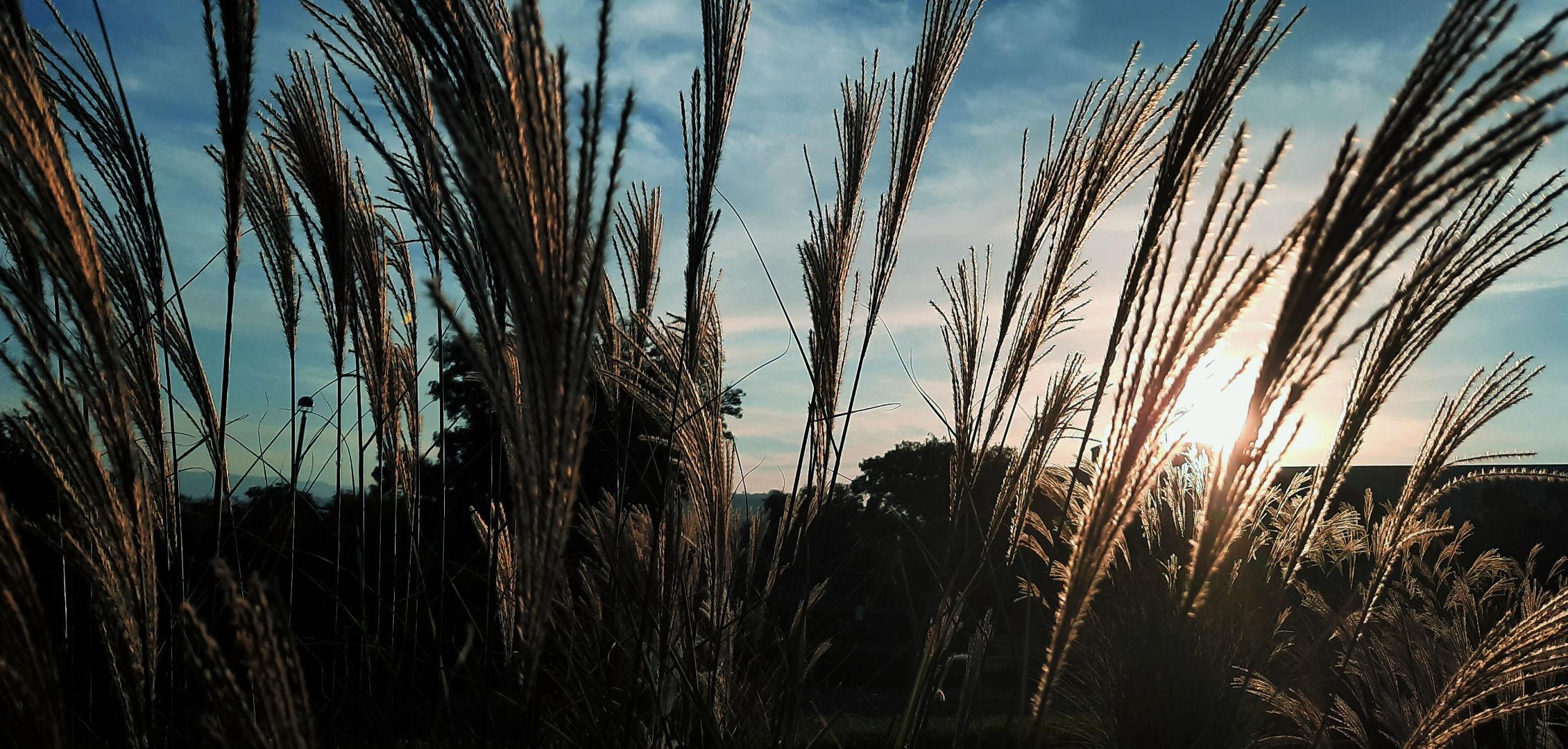 weeds-31.jpg