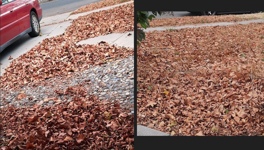 leavesagain.jpg